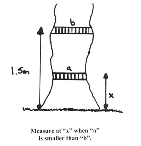 Measure tree