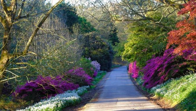 Main Drive Garden Walk