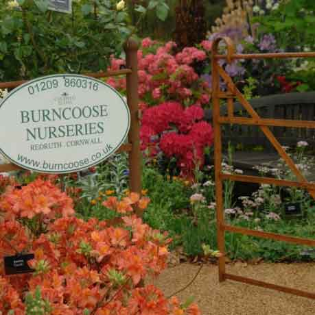Burncoose Nurseries Caerhays Estate, Castle, Spring Gardens