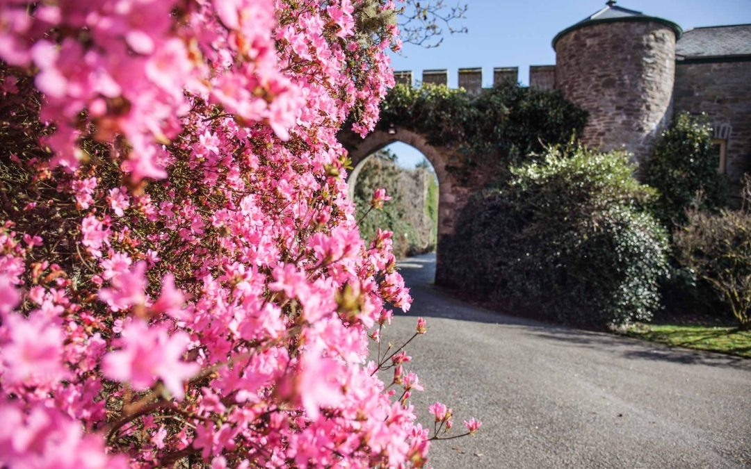 Visit Caerhays Estate, Castle Spring Gardens