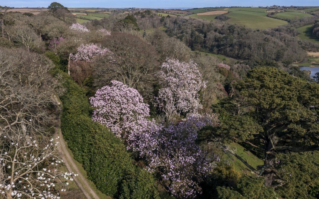 Aerial shots of the garden