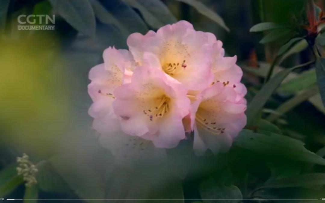 Signature plants of China