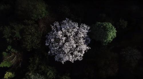 Magnolia drone footage spring 2020
