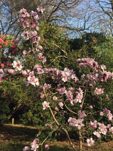 Magnolia 2019